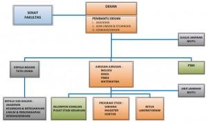 Struktur-Organisasi-mipa